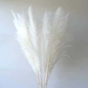 Large White Pampas Grass
