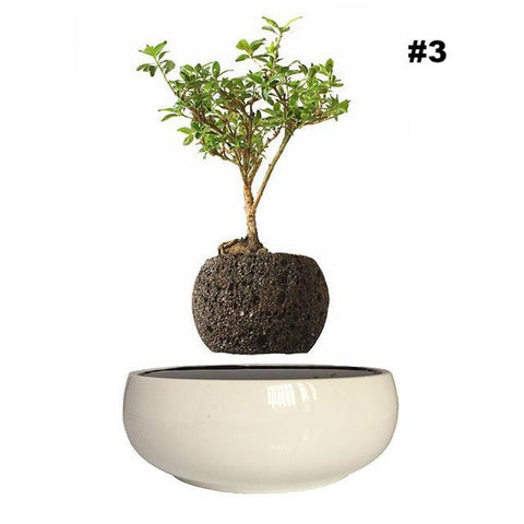 Air Bonsai Levitating Flower Pot