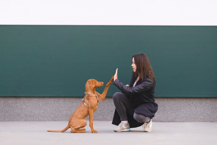 Making the Most of Your Dog Training Sessions