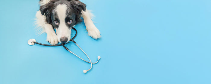 6 Factors For Better Pet Health
