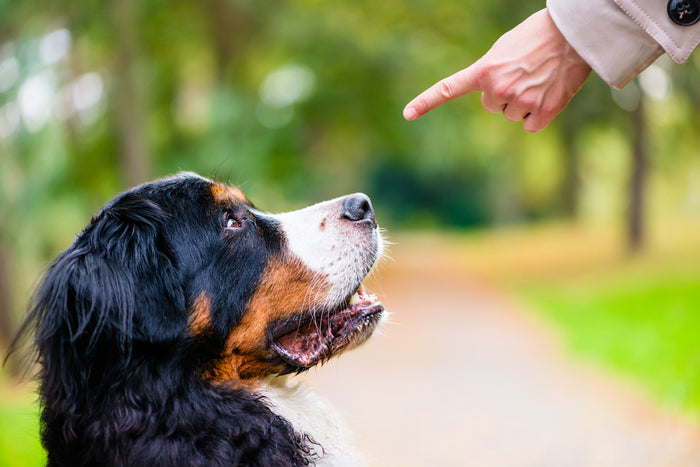 Why You Need Obedience Training For Your Dog
