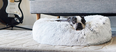 calming dog bed moving with a dog