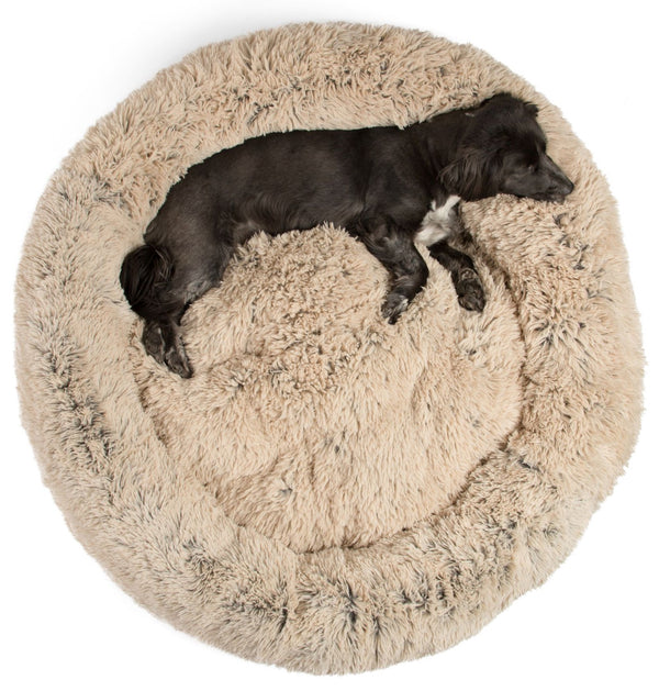 cute dog on best friends by sheri dog bed
