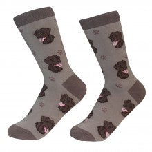 Chocolate Labrador Socks