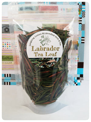 Labrador tea leaf. Wild harvested in Northwest Territories, Canada by Laughing Lichen Team.