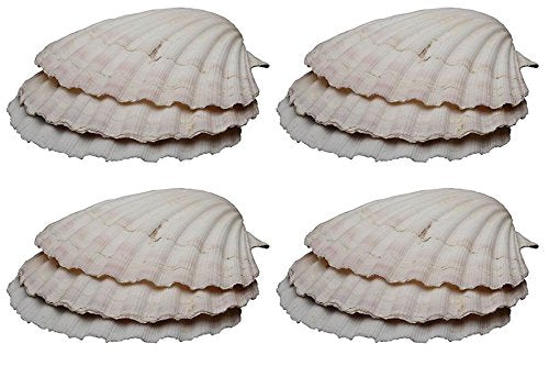 HIC Harold Import Co. BAKING SHELLS 11-12 CM, Set of 12