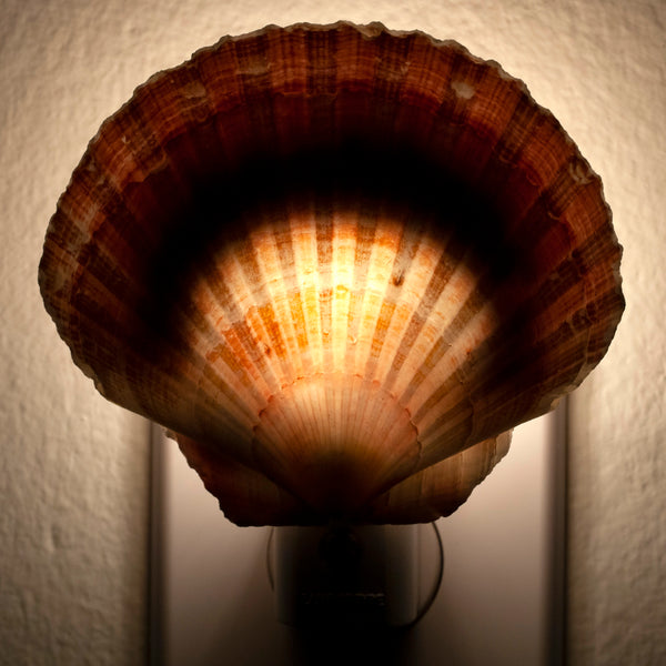 Extra Large Seashell Night Light - Handcrafted Unique Automatic Sensor LED