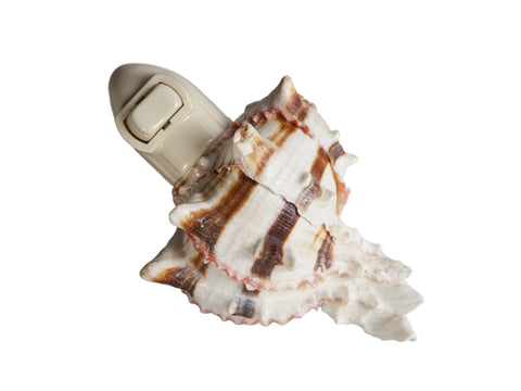 Extra Large Striped Seashell Plug In Night Light