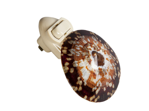 Brown Tortoise-like Speckled Seashell Plug In Night Light