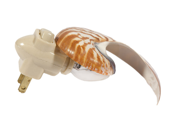 Large Nautilus Seashell Plug In Night Light