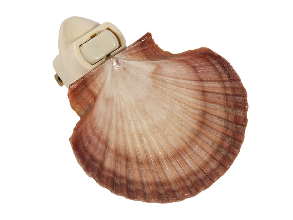 Large Pecten Raveneli Seashell Plug In Night Light