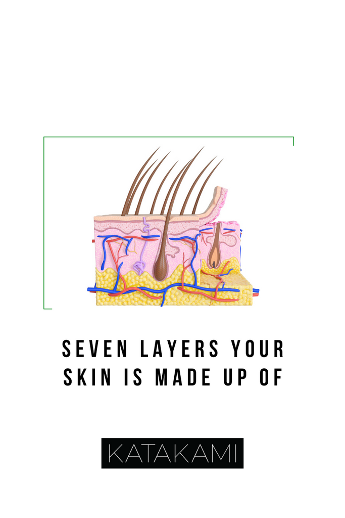 Seven Layers Your Skin Is Made Up Of