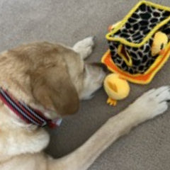 Bart's Blog February 24th, 2021 - Hide and seek interactive puzzle toy for dogs