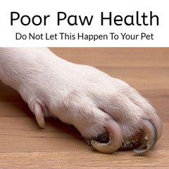 Practice Good Grooming Habits for your Pet | Pawsome Pets Supply