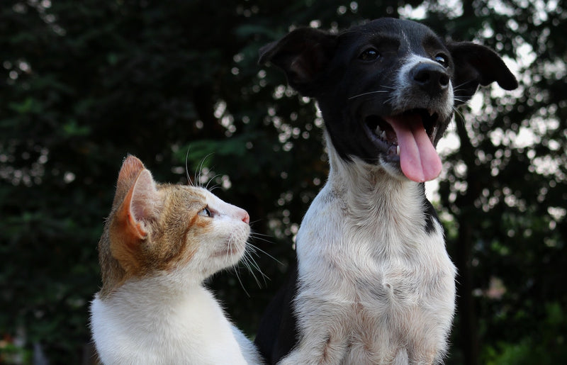 Pet Wellness: Tips for Helping Your Pets Thrive
