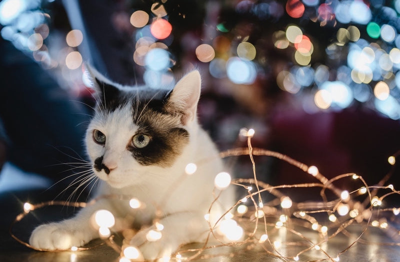 Best Christmas Gifts to Give Your Cat in 2019