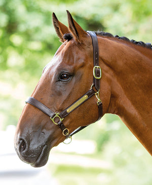 Bridleway Leather Headcollar With Nameplate