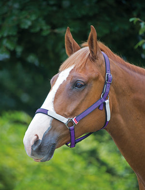 Bridleway Break Free Headcollar