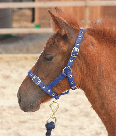Shires Nylon Foal Headcollar