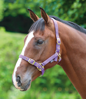 Shires Adjustable Headcollar