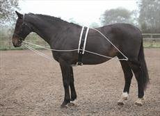 Shires Lunging Aid