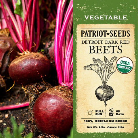 Organic Detroit Dark Red Beet Seeds (2.5g) - My Patriot Supply