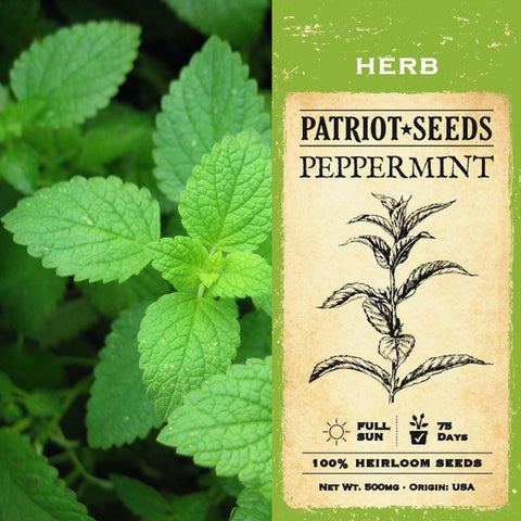 Peppermint Herb Seeds (100mg) - Patriot Seeds