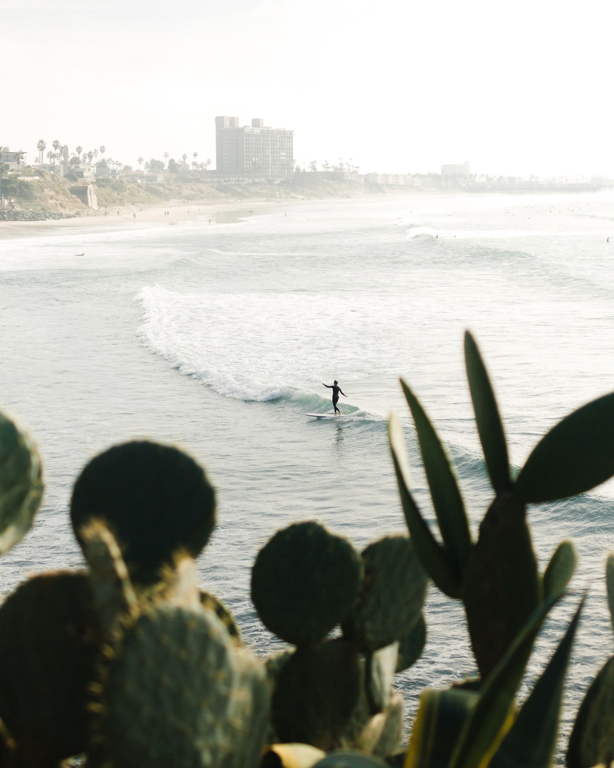 surfer riding a wave framed by cactus