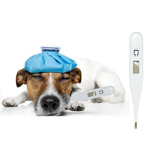 Dog Thermometer  Medical Supplies, Dog Thermometer Safe and Convenient