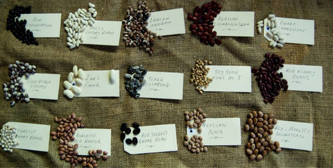 Heirloom-bean-varieties