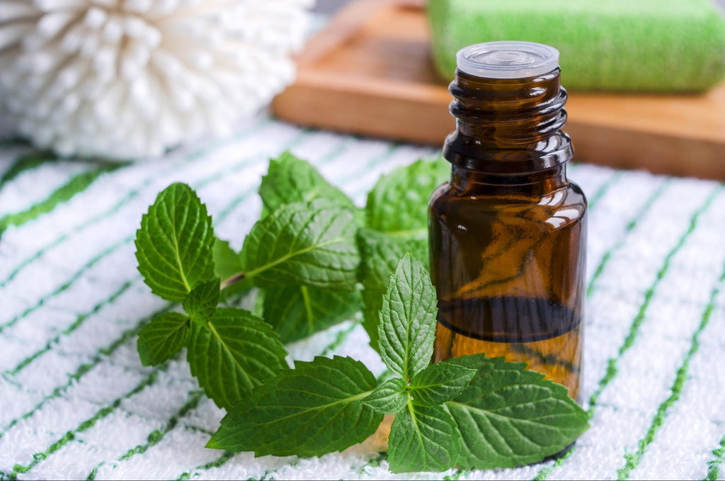 spearmint essential oil: spearmint oil with leaves