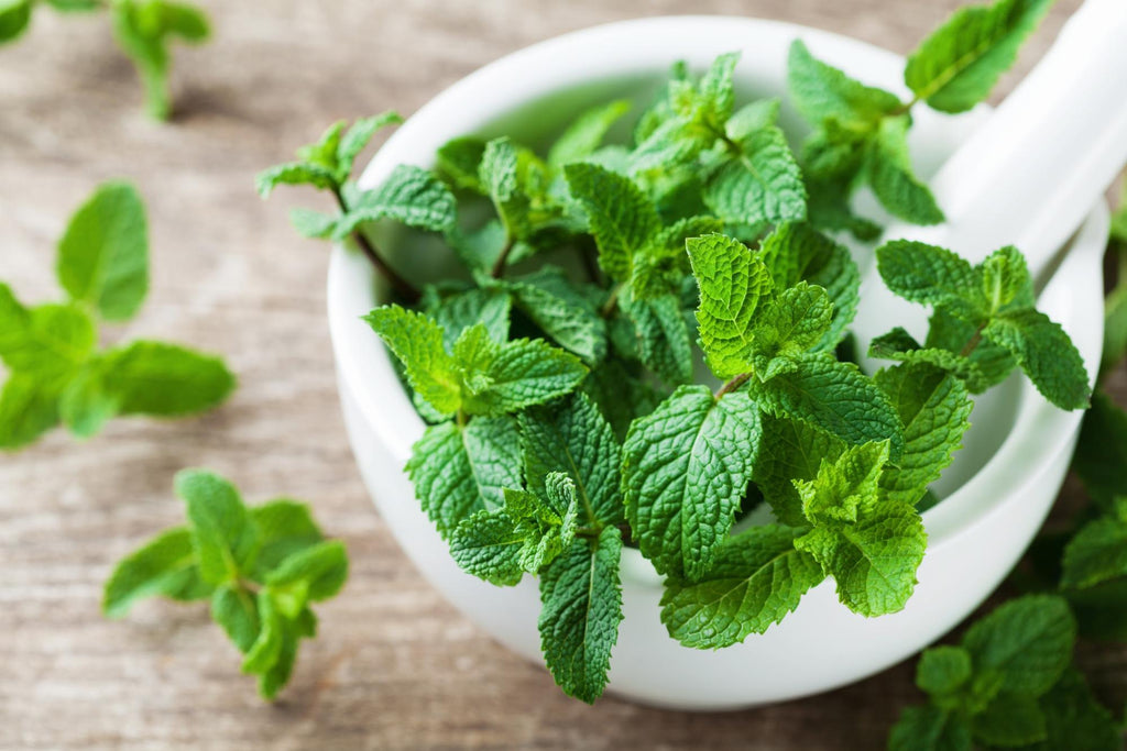 Spearmint essential oil: Spearmint leaves in a bowl