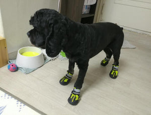 My Busy Dog Shoes - tntongadgets