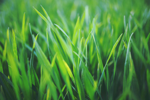 summer nutrients for lawn