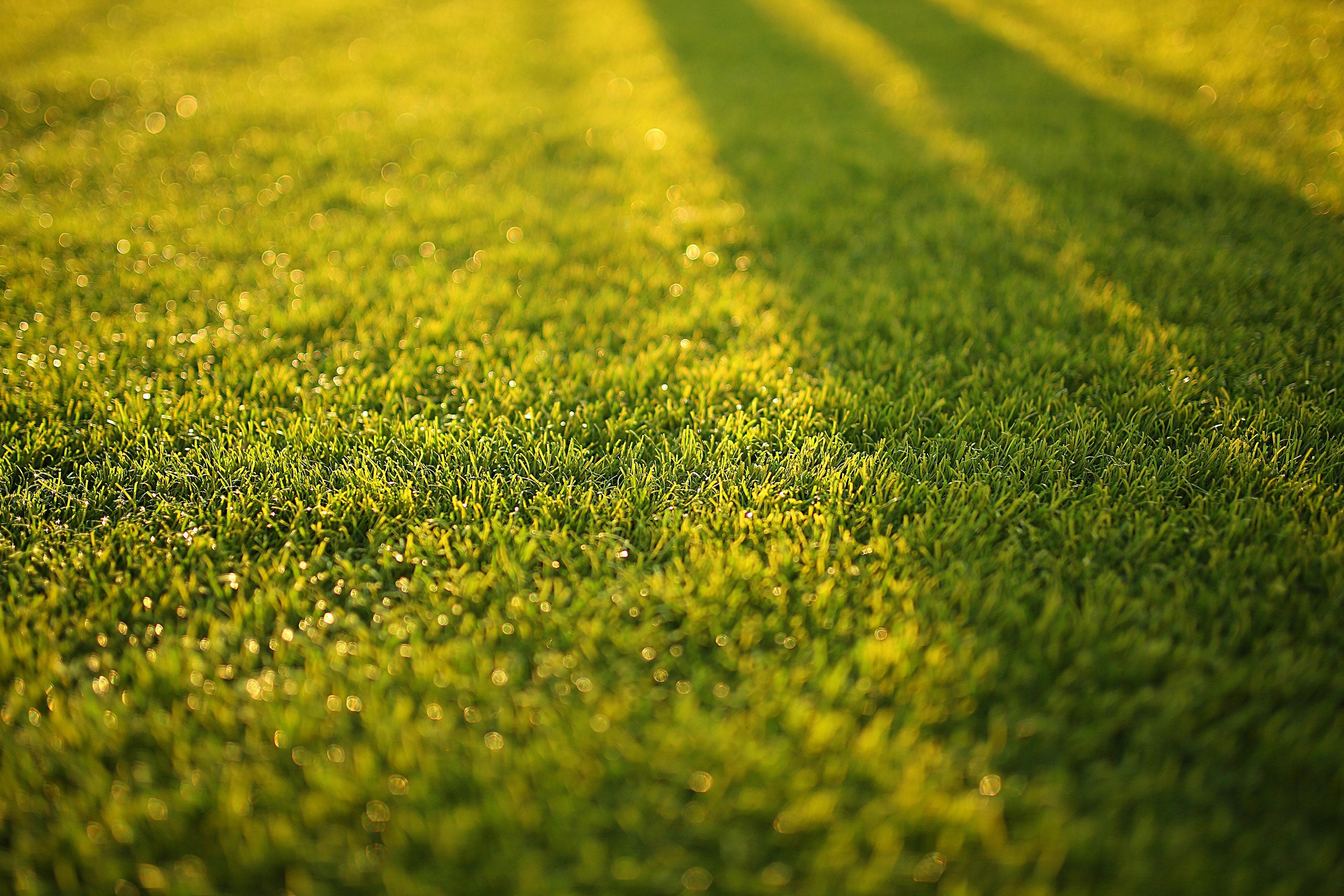 a picture of a lawn