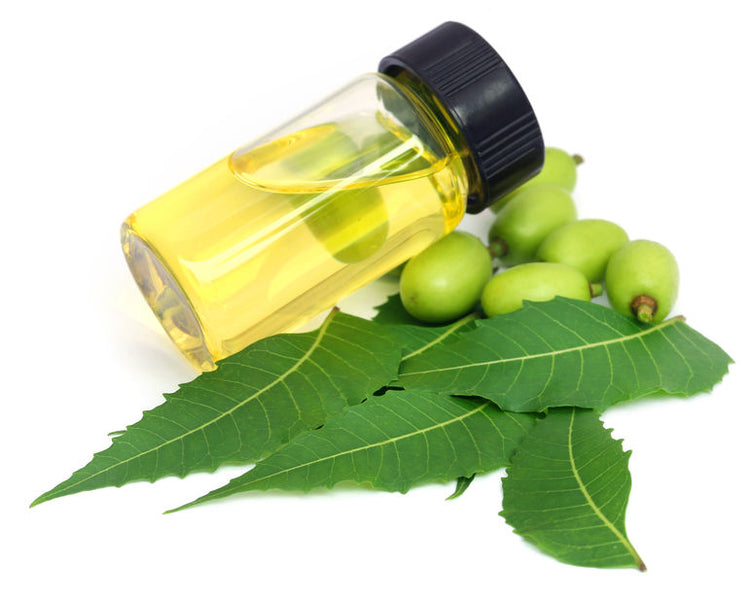 Neem Oil: A Nutrient-Packed Powerhouse for Skin