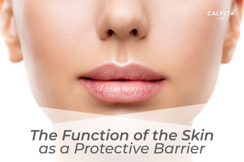 The Function of the Skin as a Protective Barrier
