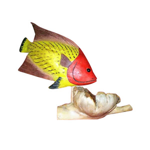 "FISH, TROPICAL REEF ON CHINABERRY, SET OF 6,  5"" - Sejati"