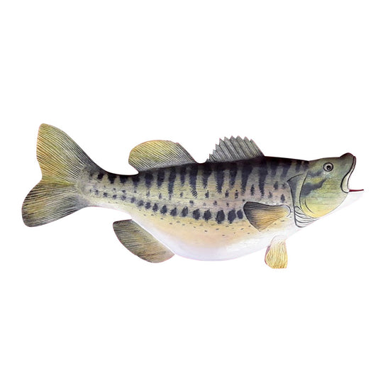BASS, LARGE MOUTH, WALL PLAQUE, PAINTED, 2O