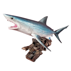 TIGER SHARK ON WOOD BURL, PAINTED, 20 INCH - Sejati