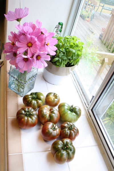 jane richmond blog - tomatoes and cosmos on window ledge