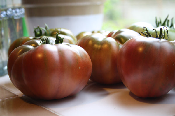 jane richmond blog - in the garden, tomatoes ripening