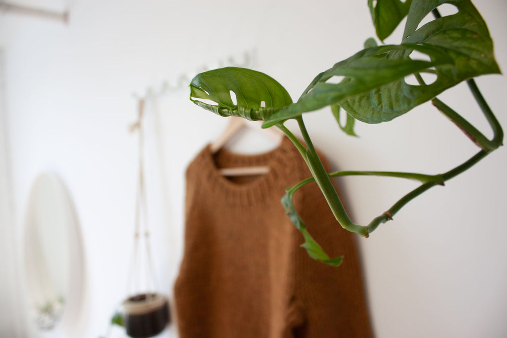 hanging plant with winston pullover blurred in the background