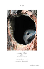NORTHERN FLICKER POSTER