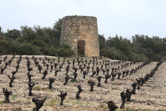 A vineyard in St. Jean de Minervois, France