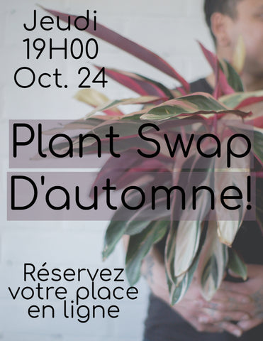 AUTUMN PLANT SWAP