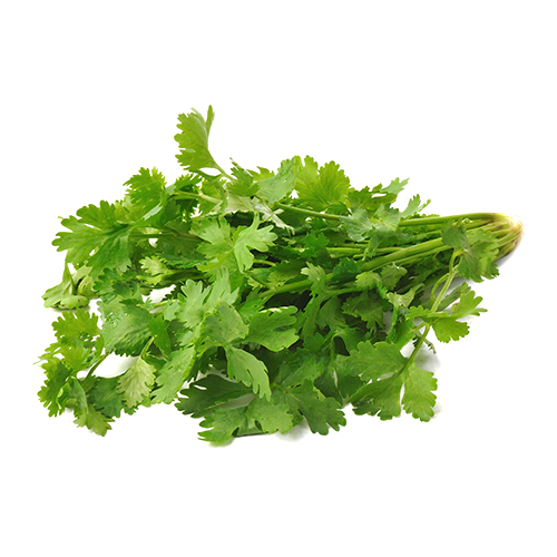 Fresh Coriander - SaveCo Cash & Carry