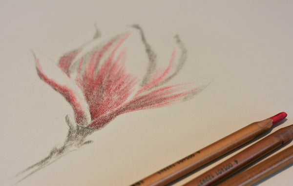 Artist Pencils to accompany Emily Rose Free Flower Magnolia tutorial