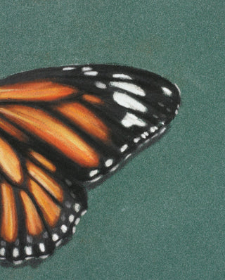 Pastels with Emily Rose Artist : Free Monarch Butterfly tutorial