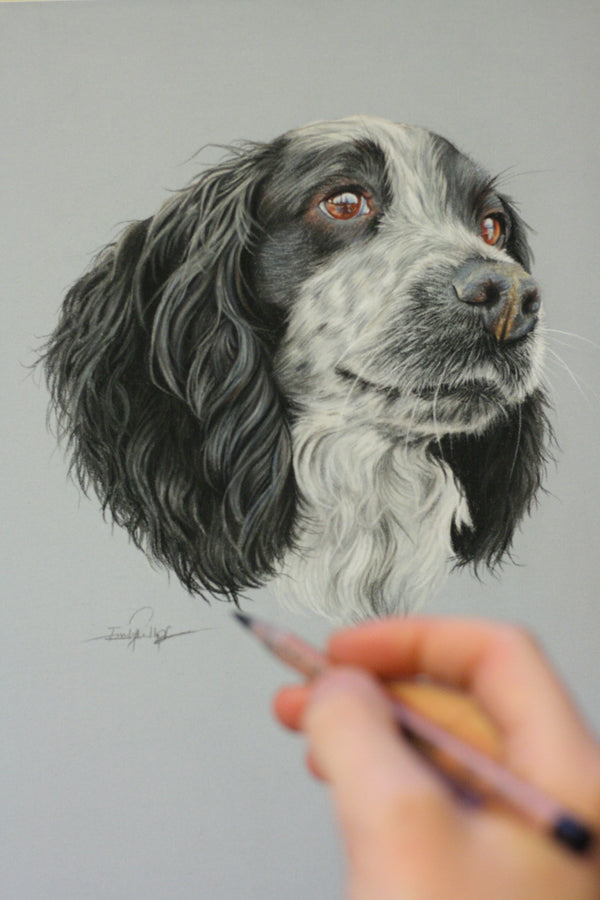 Artist Pencils to accompany Emily Rose Free Dogs Eye tutorial